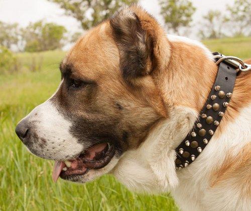 collar de cuero con pinchos para perro grande s60