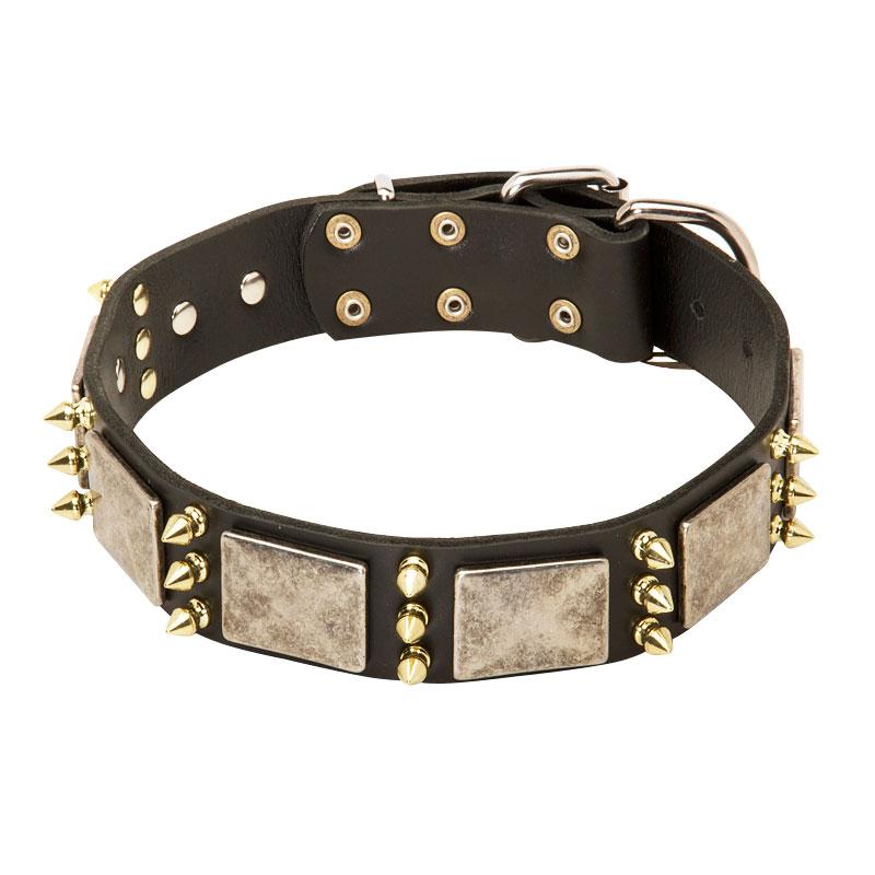 Collar para perro pitbull de cuero con pinchos «Alta costura»